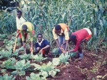 In foto ragazzi che lavorano nei campi ad Adigrat